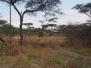 PB267179 - Gazelles Abiata Shalla NP