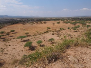 PB267186 - Uitkijkpunt Abiata Shalla NP
