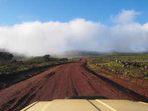 PB297401 - Bale Mountains NP