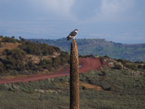 PB297424 - Roofvogel in Bale Mountains NP