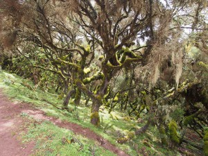 PB297489 - Bale Mountains NP