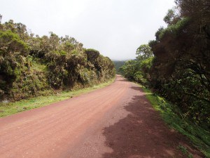 PB297490 - Bale Mountains NP