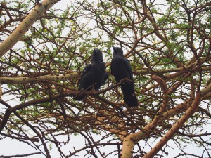 PC047809 - Vogels in Marsabit