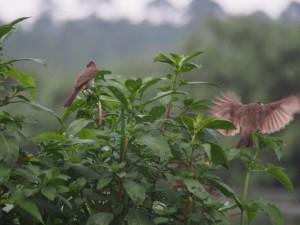P1150296 - Vogels bij The Haven