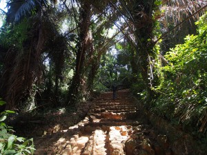 P1180481 - Jungle in botanische tuinen Entebbe