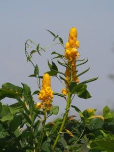 P1180548 - Bloemen in botanische tuinen Entebbe