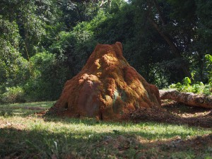 P1180581 - Kleurige termietenheuvel