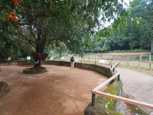 P1301661 - Entebbe dierentuin