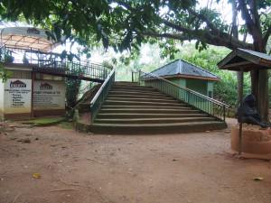 P1301743 - Gesponsorde chimpansees Entebbe dierentuin