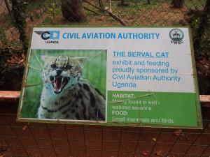 P1301807 - Gesponsorde kat Entebbe dierentuin