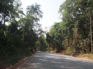 P2051888 - Openbare weg door Kibale NP