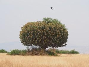 P2062063 - Cactusboom QENP