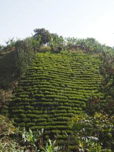 P2082208 - Verticale landbouw onderweg naar Kabale