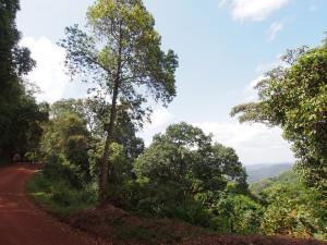 P2082234 - Bwindi NP, onderweg naar Kabale