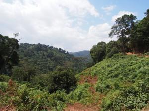 P2082244 - Bwindi NP, onderweg naar Kabale