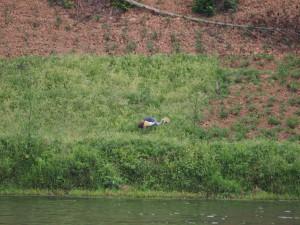P2112306 - Kraanvogel Bunyoni Overland Resort