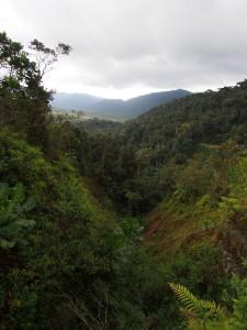 P2142528 - Uitzicht Nyungwe Forest NP