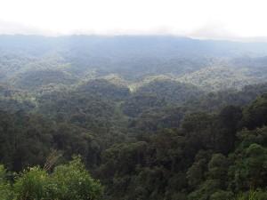 P2142551 - Uitzicht Nyungwe Forest NP