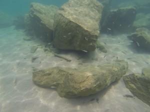 GOPR7735 - Visjes in Tanganyika meer