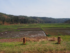 P2182714 - Onderweg naar Tanzania