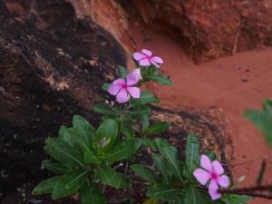 P2202897 - Bloemen bij Jakobsen Beach