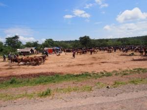 P2233001 - Koemarkt onderweg naar Mpanda