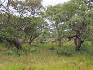 P2233014 - Landschap onderweg naar Mpanda