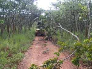 P3073971 - Obstakels genoeg in Nyika NP