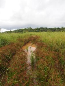 P3073986 - Is dit een weg of een rivier, Nyika NP