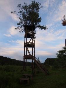 P3104498 - Gammele uitkijktoren Luwawa Forest Lodge