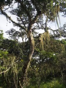 P3114525 - Wandelen bij Luwawa