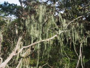 P3114526 - Wandelen bij Luwawa