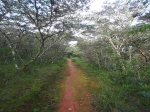 P3114530 - Wandelen bij Luwawa