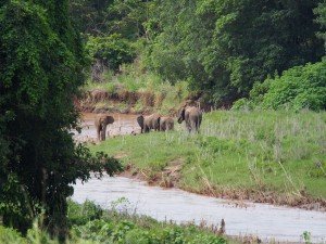 P3124545 - Olifanten Nkhotakota NP