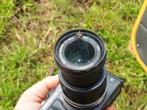 20170317 104210 - De spinnen zitten zelfs op mijn cameralens