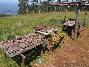 P3174828 - Mineralen of plantjes gratis af te halen bij Queens View Zomba plateau