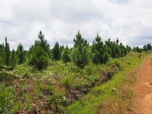 P3174844 - Zomba plateau
