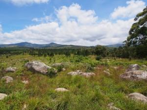 P3174865 - Zomba plateau