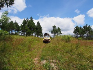 P3174871 - Zomba plateau