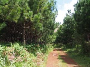 P3174873 - Zomba plateau