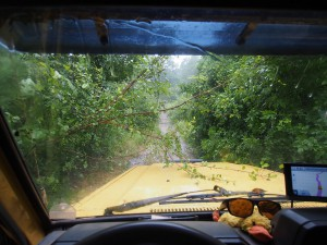 P3205178 - Welcome to the jungle Majete NP