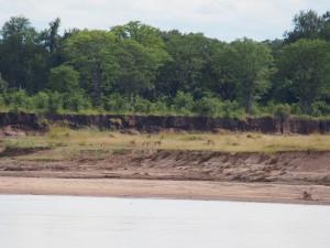 P3245259 - Impalas vanaf Wildlife Camp