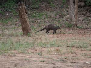 P3265320 - Zebramangoesten Wildlife Camp