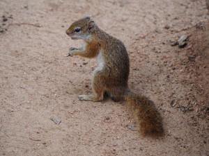 P3265321 - Eekhoorn Wildlife Camp