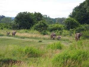 P3265331 - Olifanten op weg naar Wildlife Camp