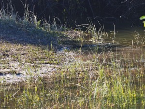 P4025896 - Krokodil Mayukuyuku Camp