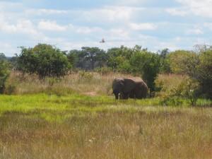 P4056067 - Vredig olifantplaatje bij Kafue NP