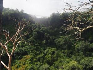 P4176546 - Kloof Victoria watervallen
