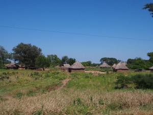 P4196651 - Op weg naar Ngonye waterval