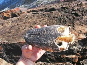P4206735 - Vissenkop Boiling Pot Ngonye waterval